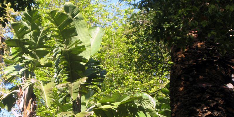 Botanischer Garten Lissabon