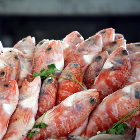 Espinho Atlantik Strand Fisch