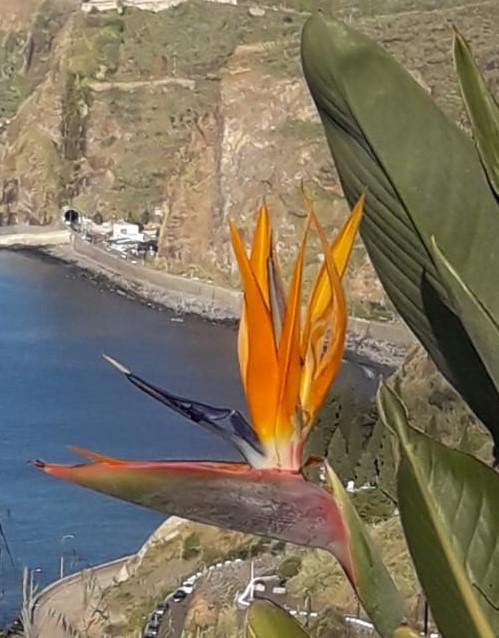 Madeira Portugal Blume Reiseführer Wahrzeicheen