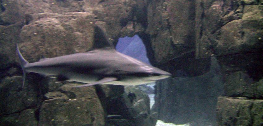 Ozeanarum Lissabon Aquarium Besuch Hai