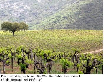 Portugal Herbst Reisezeit Wein