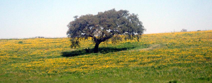 Portugal Reisezeit Frühling