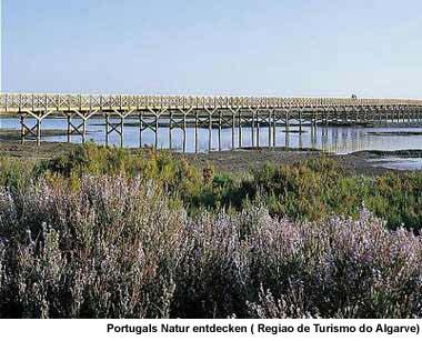 Ria Formosa Nationalpark Algarve