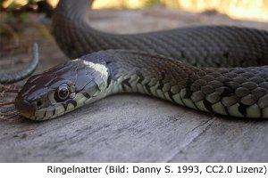 Schlange Algarve Gift Gefahr