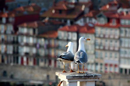 Porto entdecken sightseeing