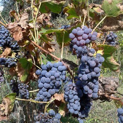Wein Portugal Tipps