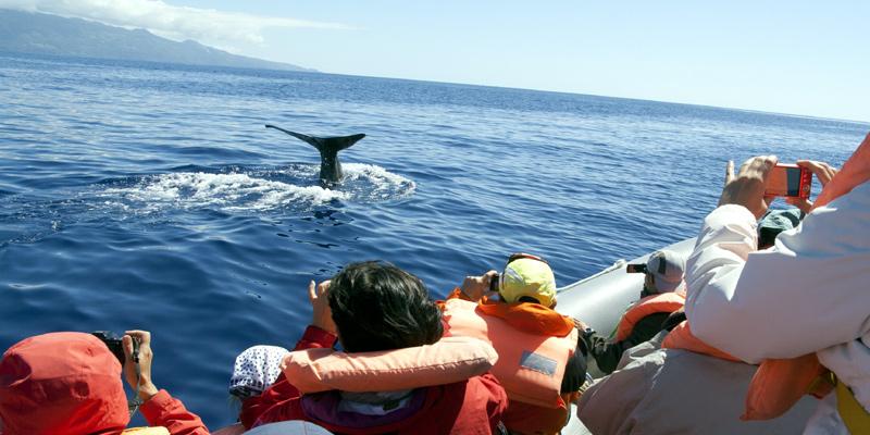 Wale Delfine Wahle Watching beobachten